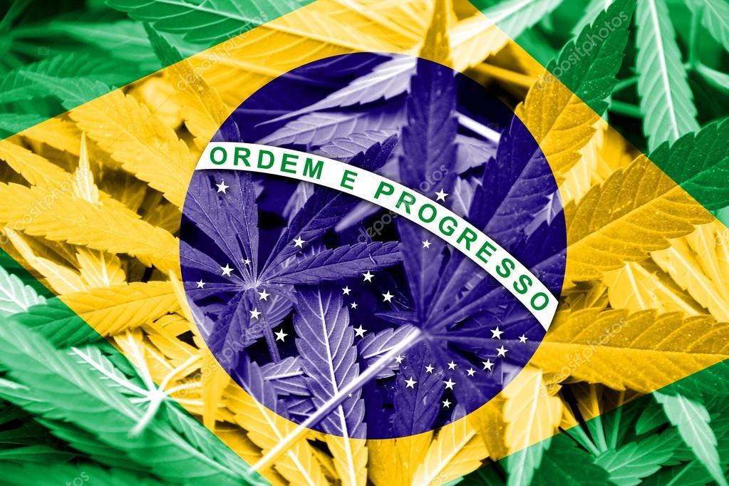 브라질 대마합법화